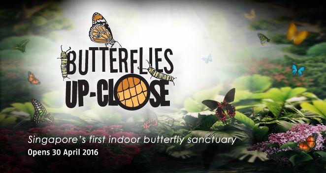 butterflies-up-close